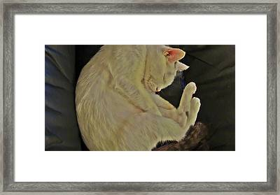 Oliver Safe And Sound Framed Print by Joan Meyland