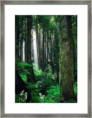 Olympic Forest Framed Print by Ric Soulen