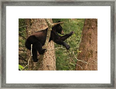 Framed Print featuring the photograph Omnivore by Doug McPherson