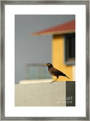 On A Lookout Framed Print