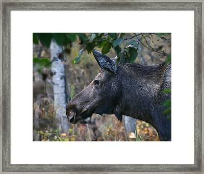 Framed Print featuring the photograph On Alert by Doug Lloyd
