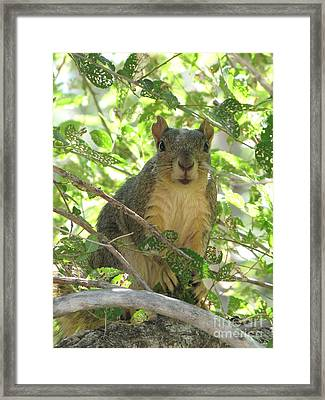 On Alert Framed Print by Michelle H