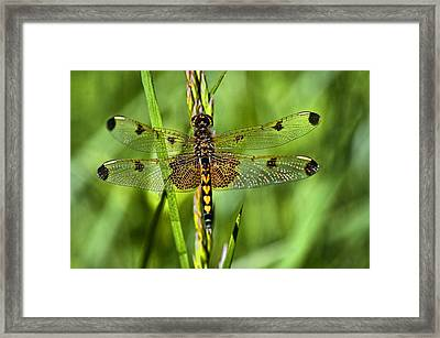 On Delicate Wings Framed Print by Cheryl Cencich