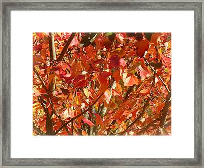 On Fire Framed Print by Lee Yang