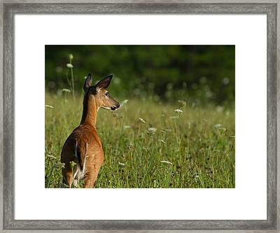 On Guard  Framed Print by Glenn Lawrence