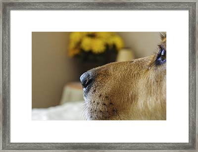 On Guard Framed Print by Scott McGuire