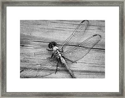 On The Boardwalk IIi Framed Print by Stacy Michelle Smith