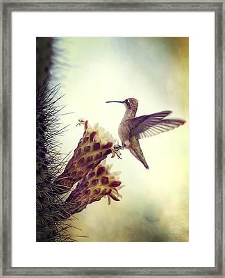 On The Edge II  Framed Print by Saija  Lehtonen