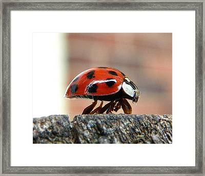 Framed Print featuring the photograph On The Edge Of Eternity by Chad and Stacey Hall