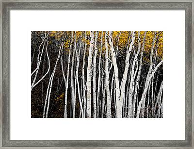 On The Edge Framed Print by The Forests Edge Photography - Diane Sandoval