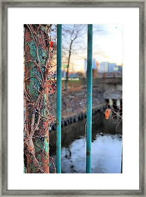 On The Fence Framed Print by JC Findley