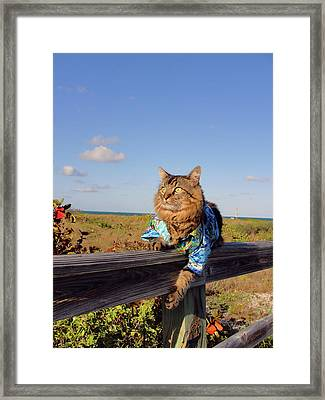 On The Fence Framed Print by Joann Biondi