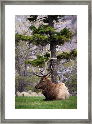 Framed Print featuring the photograph On The Grass by Steve McKinzie