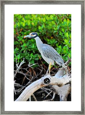 On The Limb Framed Print by Barry R Jones Jr