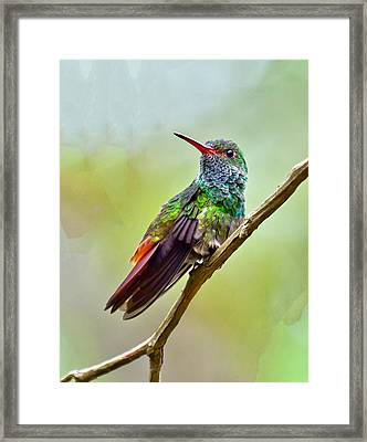 Framed Print featuring the photograph On The Look-out by Susi Stroud