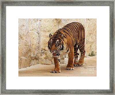 Framed Print featuring the photograph On The Lookout by Julie Clements
