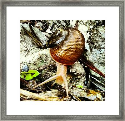 On The Move Framed Print by Chasity Johnson