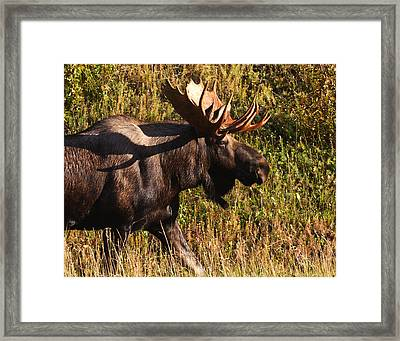 Framed Print featuring the photograph On The Move by Doug Lloyd