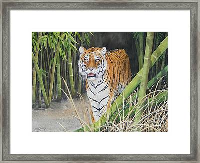 On The Prowl  Sold Prints Available Framed Print