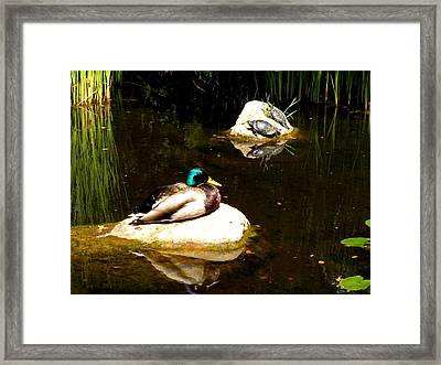 On The Rocks Framed Print by Andrea Cullinane