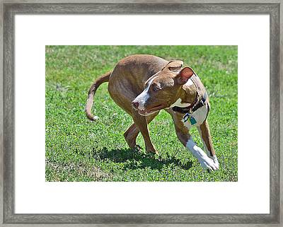 On The Run Framed Print