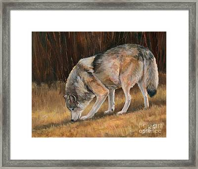 Framed Print featuring the painting On The Trail - Wolf by Sheri Gordon