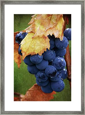 On The Vine Framed Print by Dale Kincaid