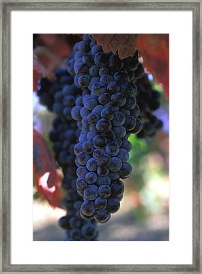 On The Vine Framed Print by Kathy Yates