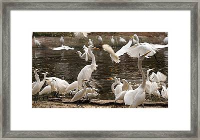 On The Wing Framed Print by Bret Worrell