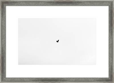 On The Wings Of A Eagle Silhoette Framed Print by Daniel Henning
