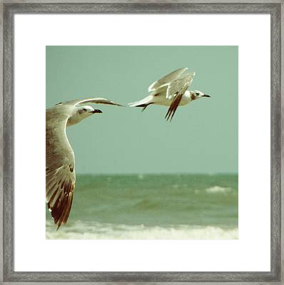 On The Wings Of A Seagull Framed Print