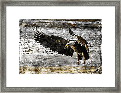 On The Wings Of Love Framed Print by Carrie OBrien Sibley