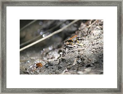 On Top Of The Mountain  Framed Print by Amy Gallagher