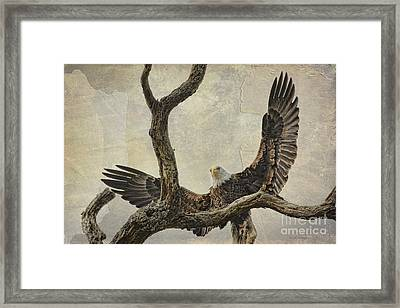 On Wings High Framed Print by Deborah Benoit
