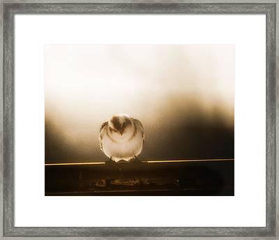 On Winters Edge Framed Print