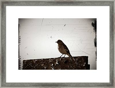 Once Upon A Mockingbird Framed Print by KayeCee Spain