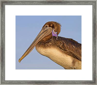 Once Upon A Time  Framed Print by Betsy Knapp