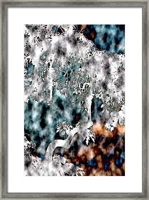 Once Upon A Tree Framed Print by Elizabeth  Doran
