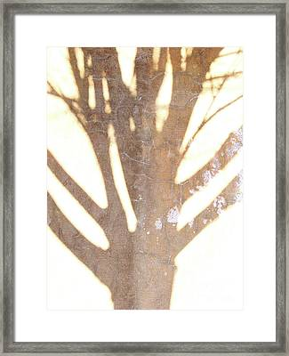 Once Upon A Tree Framed Print by Mark Holbrook