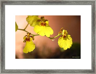 Oncidium Goldiana Orchid Framed Print