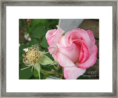 One Arriving And One Leaving Framed Print by Sandra Maddox