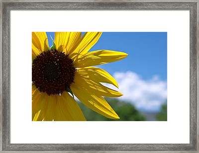 One Beautiful Day Framed Print by Michael Krahl