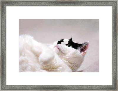 Framed Print featuring the photograph One Belly Rub Please by JM Photography