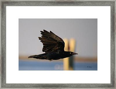 One Black Bird Framed Print by Roena King