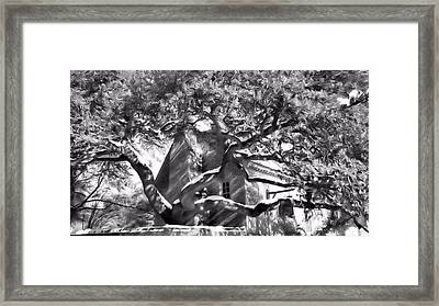 Framed Print featuring the photograph One Cool Old Tree by Katie Wing Vigil