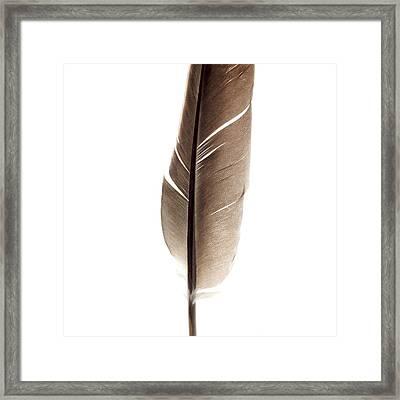 One Feather Framed Print by Bernard Jaubert