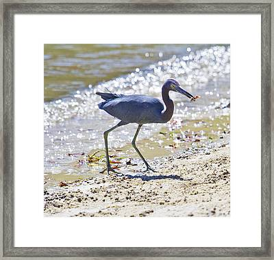 One Fiddle Down Framed Print by Betsy Knapp