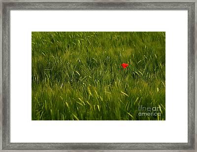 One Flower Framed Print by Odon Czintos