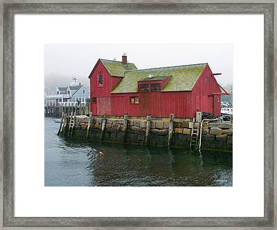 One Foggy Afternoon In Spring Framed Print