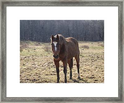 One Funny Horse Framed Print by Robert Margetts
